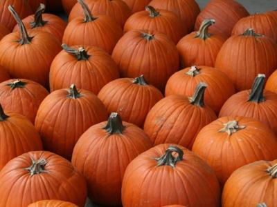 102419_CTN_Pumpkins(Beth Dalbey_Patch).jpg