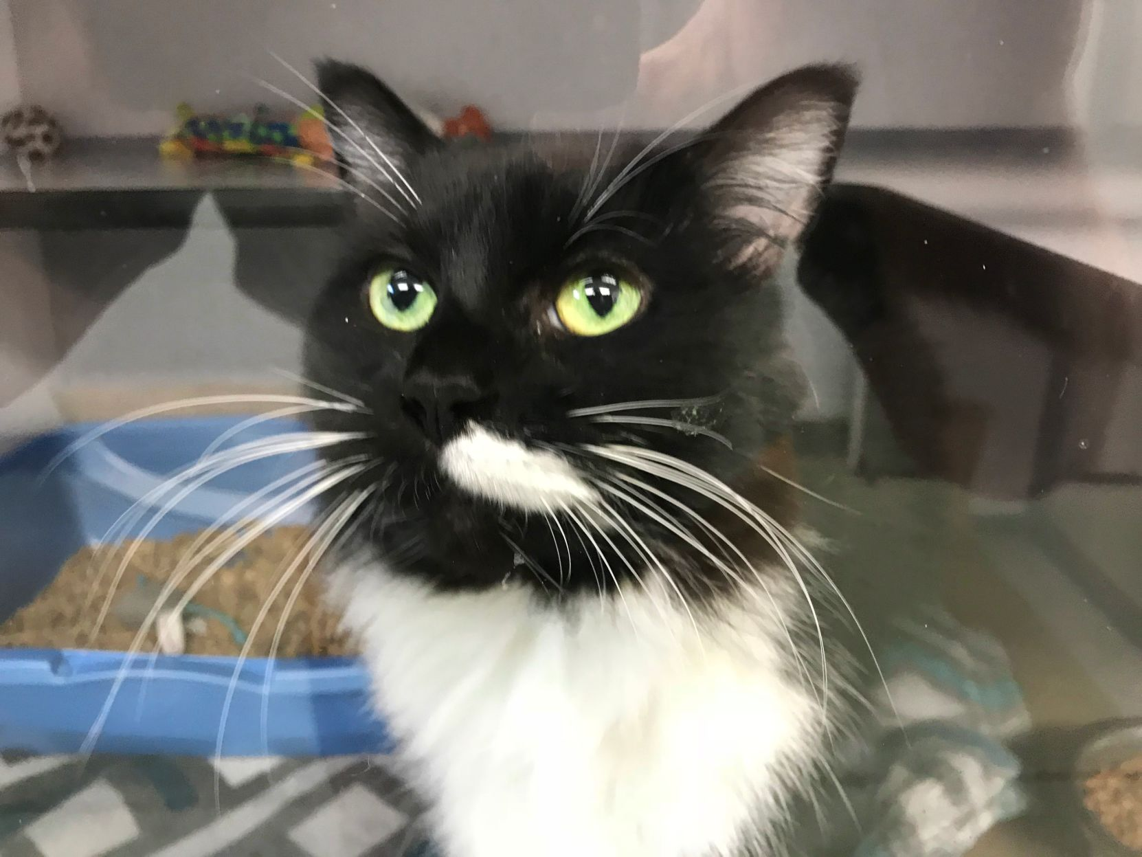 Animal shelter encouraging locals to adopt adult cats