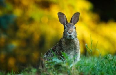 071521_CTN_Rabbit.jpg