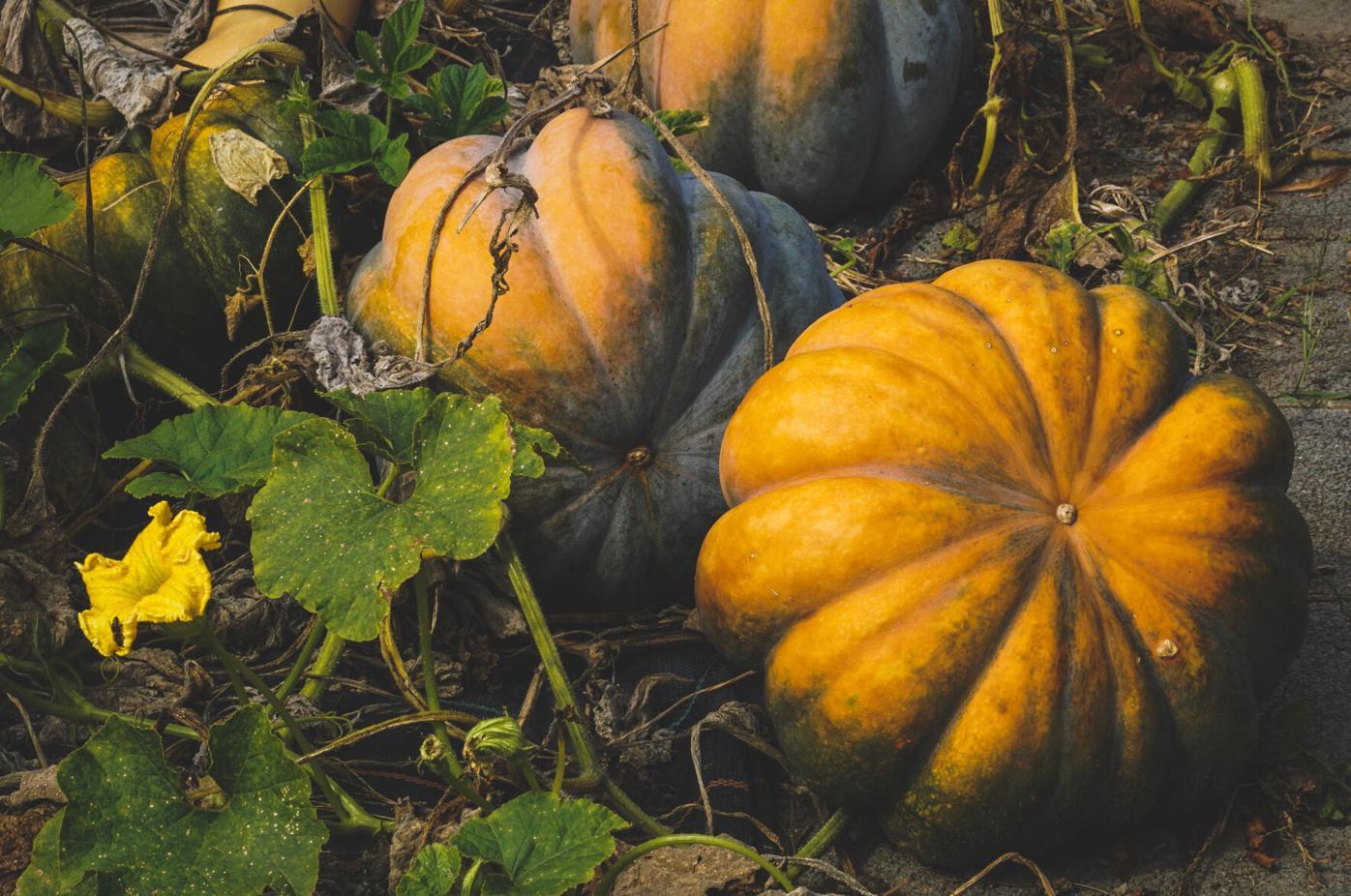 100721_CTN_Pumpkin