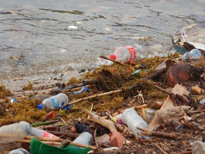 Mired in microplastics