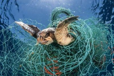 entangled turtle.jpg