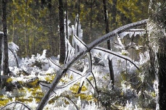 Tropical snowfall