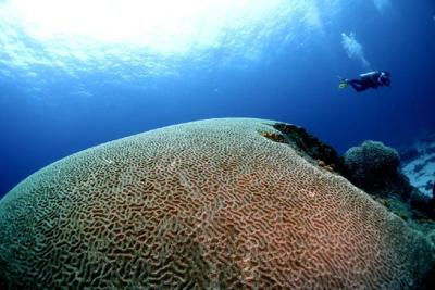 The world-famous Brain Coral