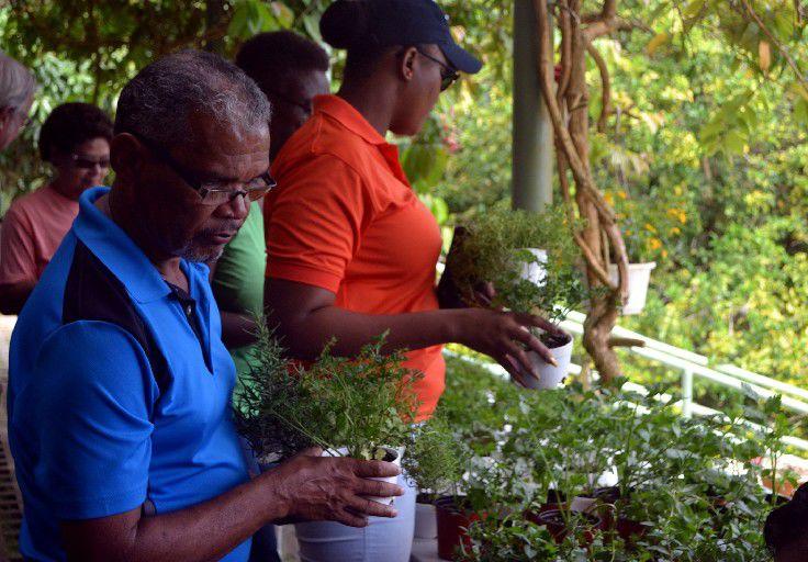 Purchasing herbs for planting at Paradise Villa