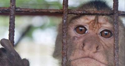 Loud music at Lara's stresses zoo animals