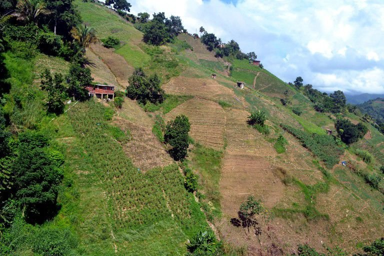 Cultivated mountainside of Paramin