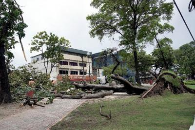 T&TEC workers cut branches