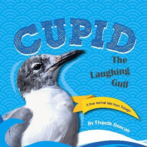 a deeper message: Cupid The Laughing Gull