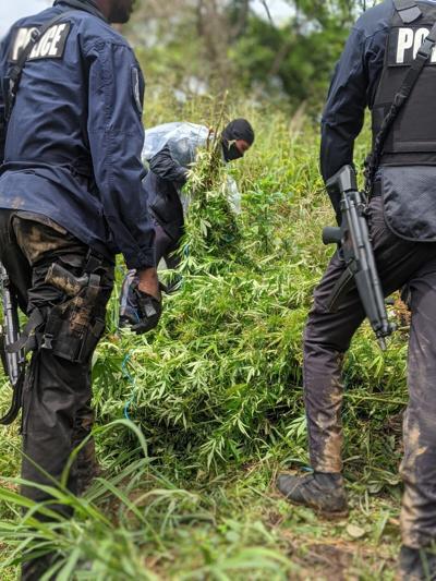 TT 5 MILLION Marijuana Find 27102020 B.jpeg