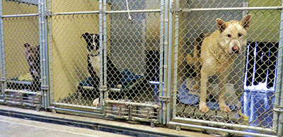 Trinity County Animal Shelter