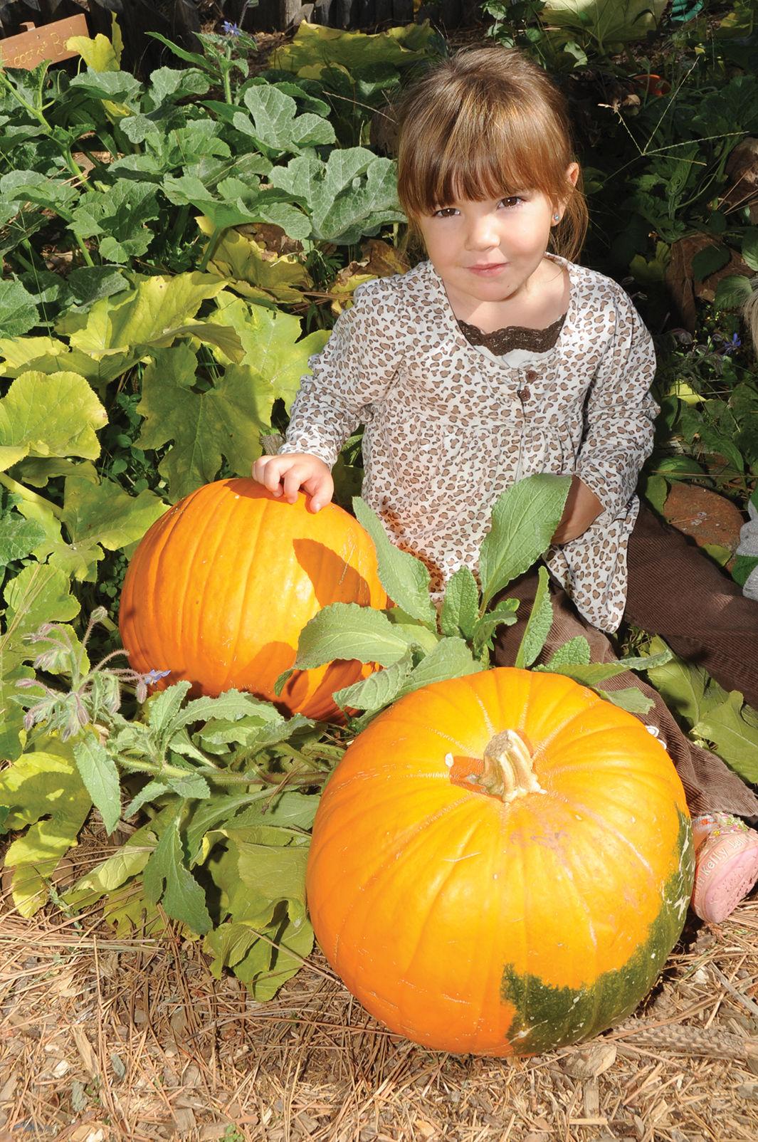 children u0027s garden project u0027s fall pumpkin patch activities games