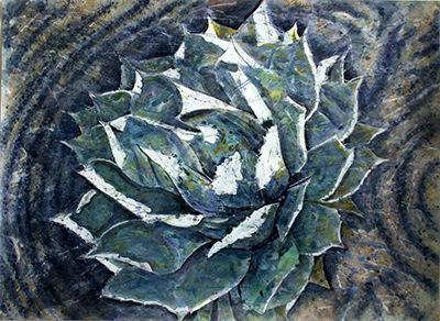 Sempervirens Succulent