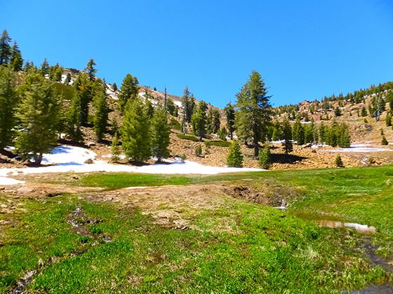 Red Mountain Meadow