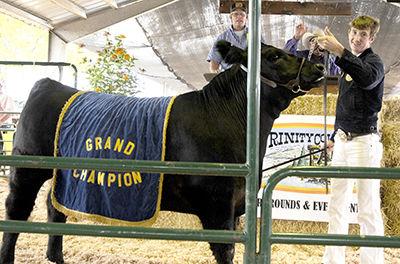 Fair livestock auction