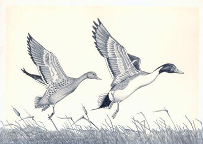Duck stamp art