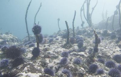Changing ocean