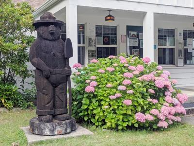 Smokey Bear Gasquet