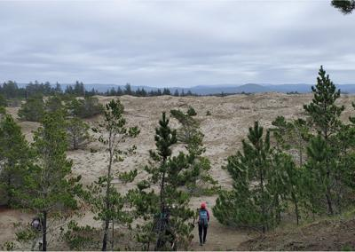 Volunteers making a difference at Tolowa Dunes State Park
