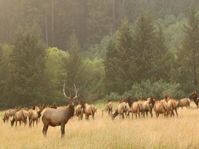 elk California