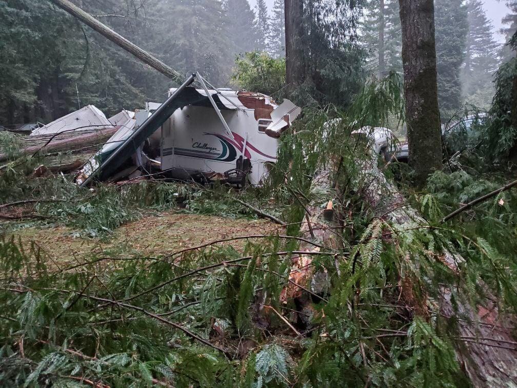 Tree Smashes RV