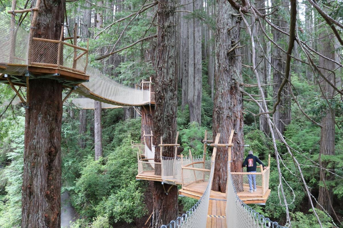 Redwood Canopy Trail at Trees of Mystery in Klamath