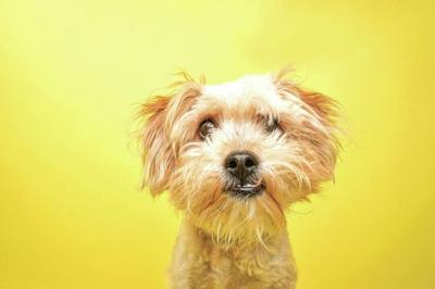 Get your dog licensed by Feb. 4