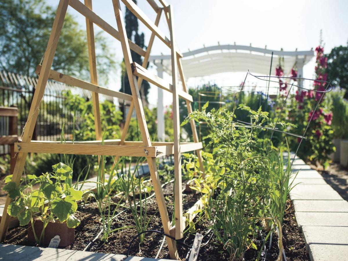 Garden Kitchen 4