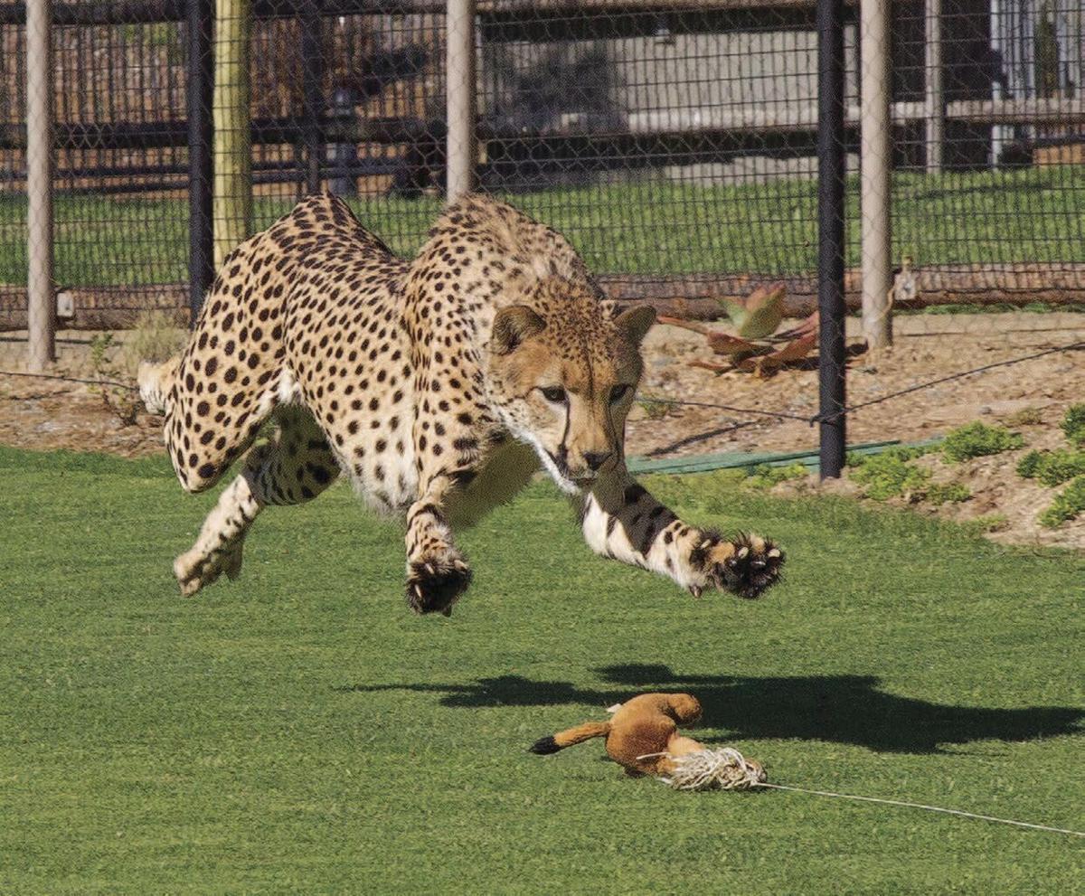 San Diego Zoo .jpg