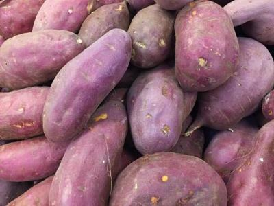 fresh-harvested-sweet-potatoes-picture-id868296002.jpg