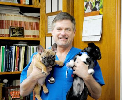 how long does dog distemper vaccine last
