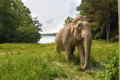 b2 elephant sanctuary Shirley .jpg