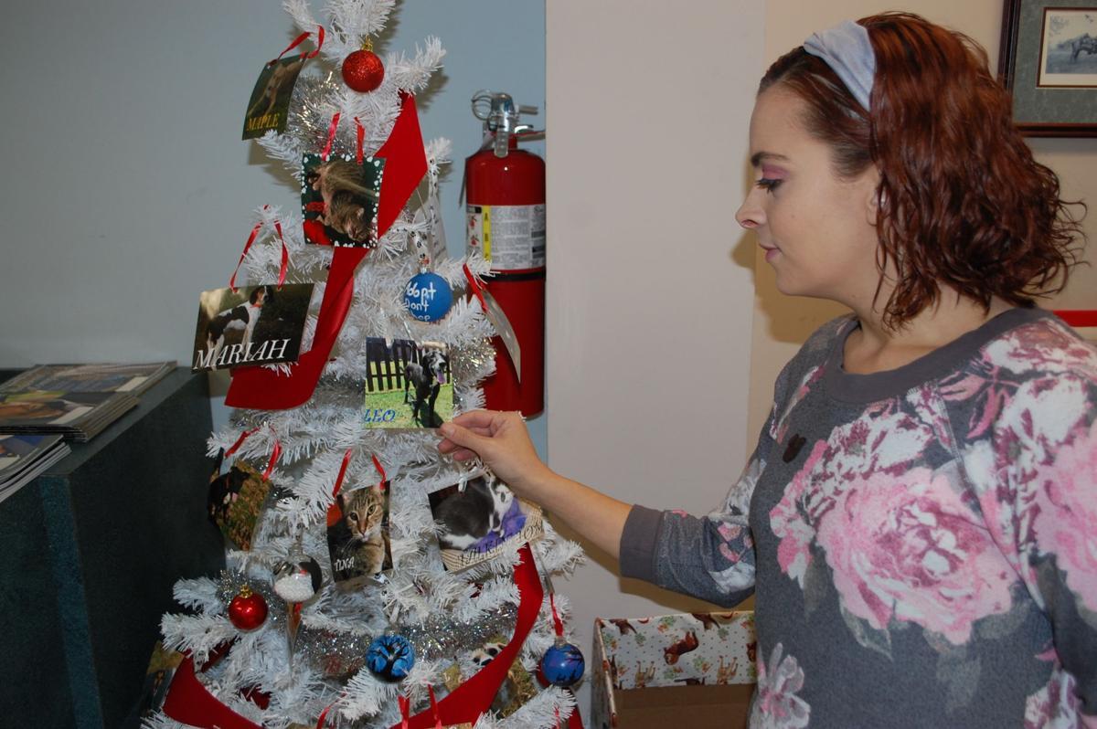 Pet Angel Tree.JPG