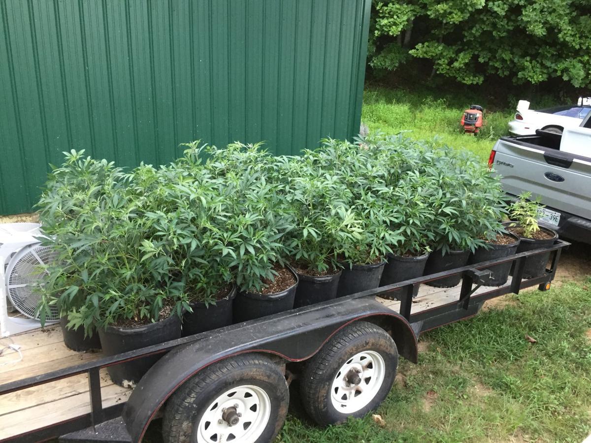 seized pot plants