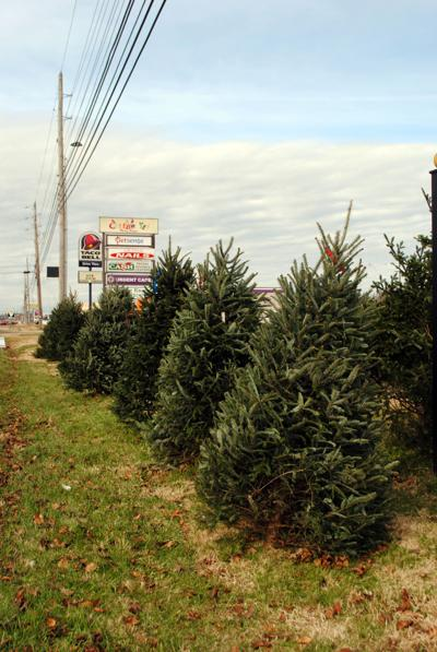 Live Christmas trees cost a little more green this year | Local News ...