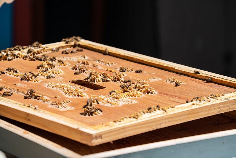TV_0820_BeekeepersGuild_JackieBrewer-5.jpg