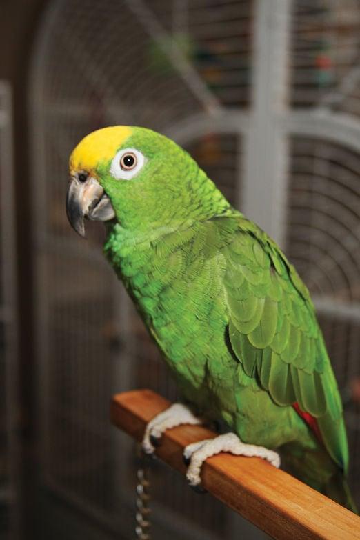 Therapeutic birds