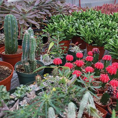 3 garden shops to get you prepared for spring
