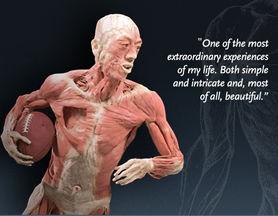 Human bodies on display