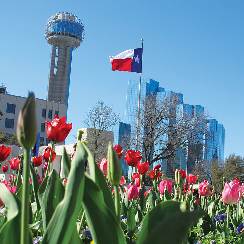 6 fun things to do in Dallas, Texas