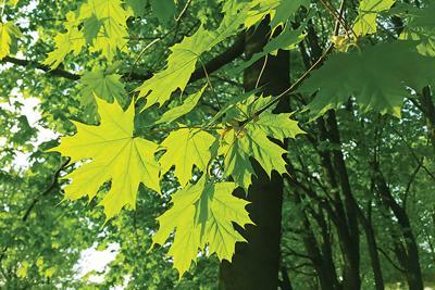 Tree shutterstock