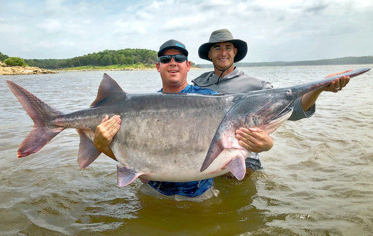 2020-07-01 ssl-staterecordfish
