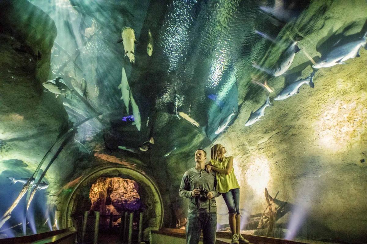 Inside Johnny Morris' World of Wildlife Museum ...
