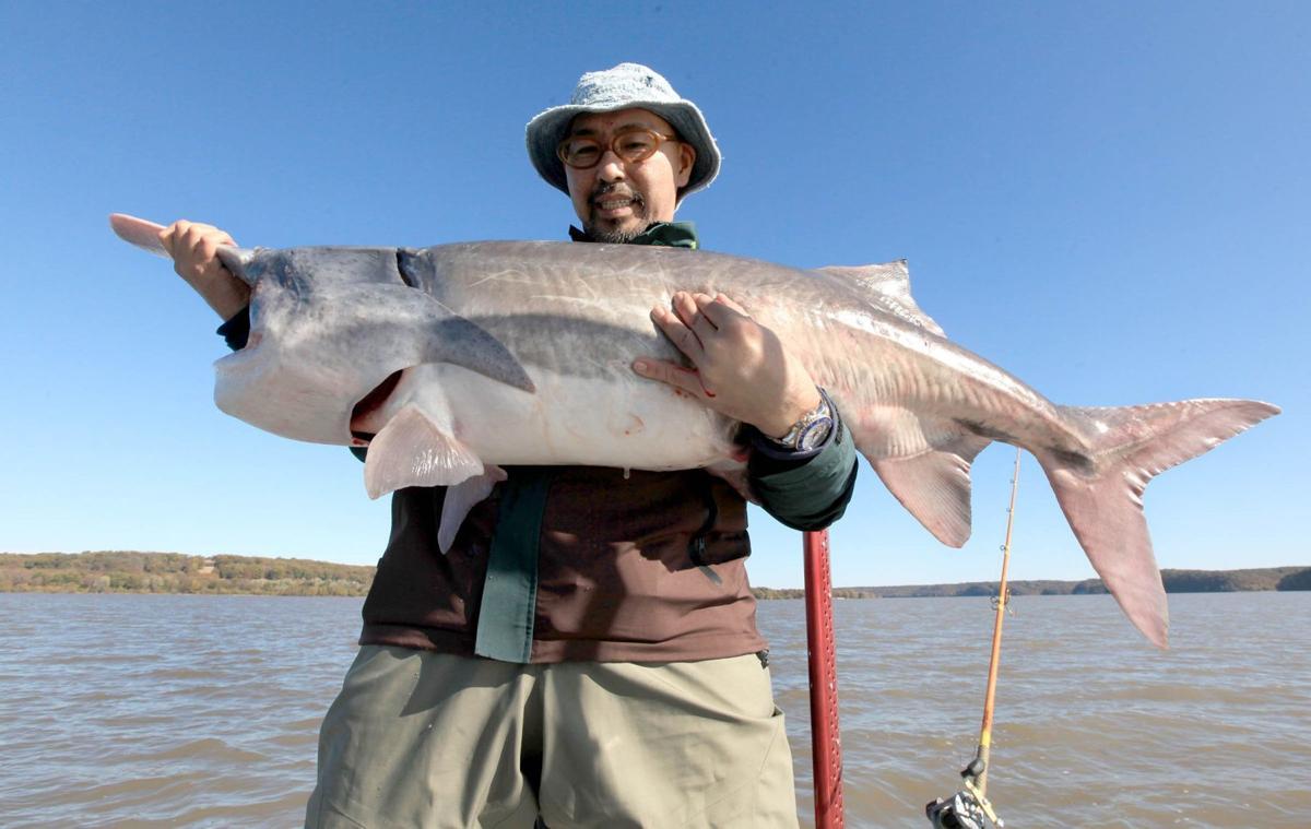paddlefish Yoji Nabata