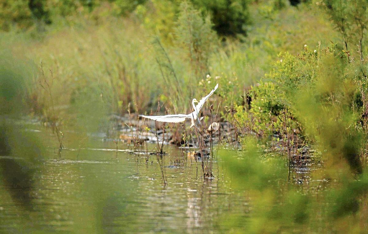 The Arkansas River teems with life big and small | Tulsa World
