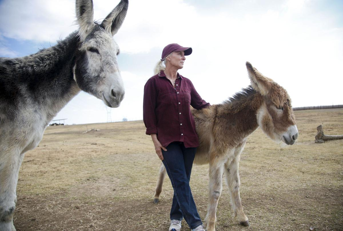 Donkeys have Bixby woman to thank for rescue, lifelong homes