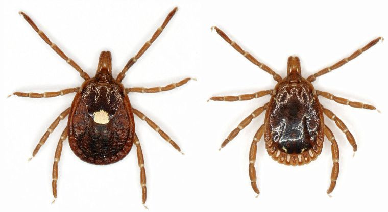 Oklahoma ticks