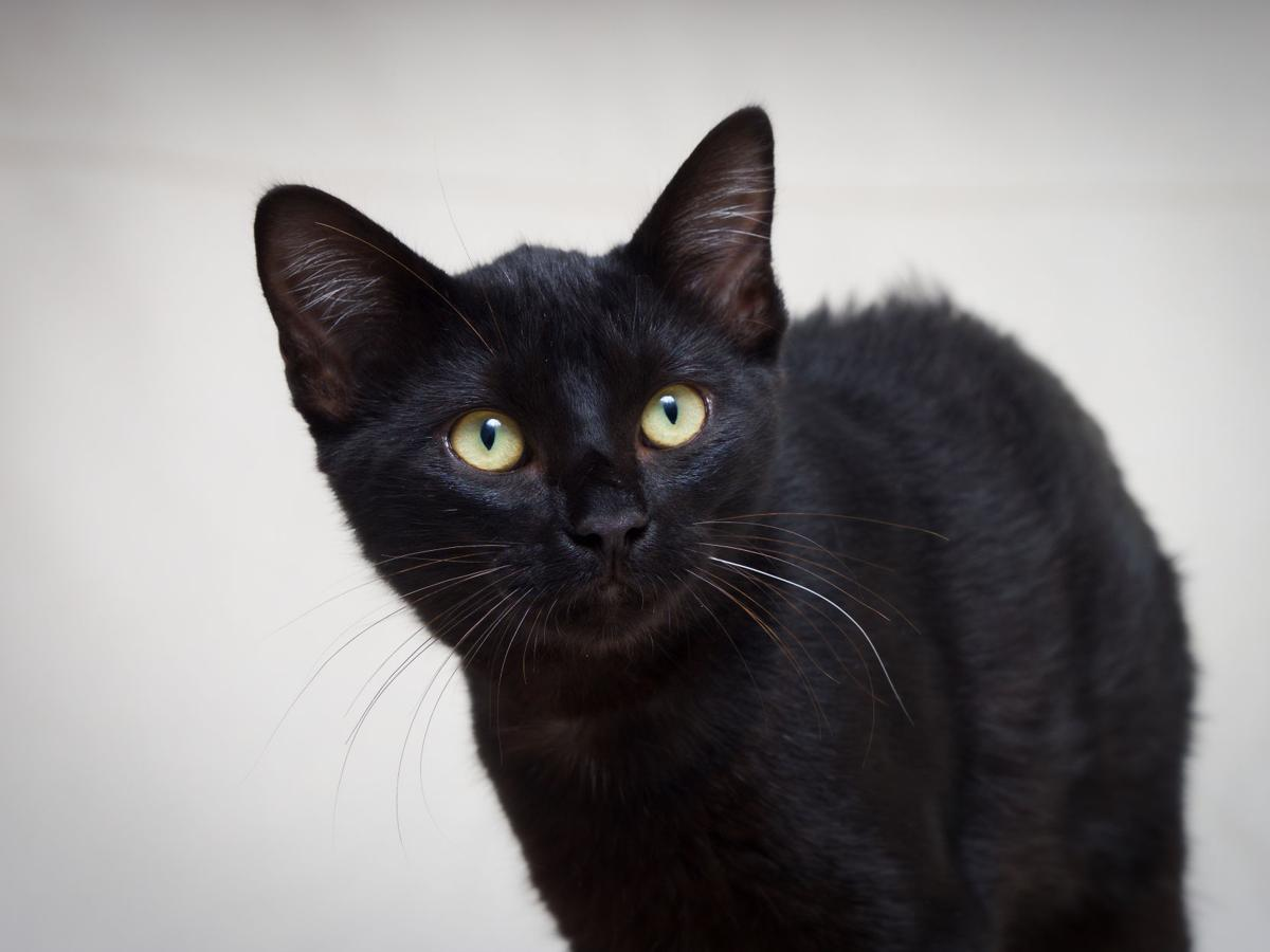 Looking for love Adoptable pets in Tulsa