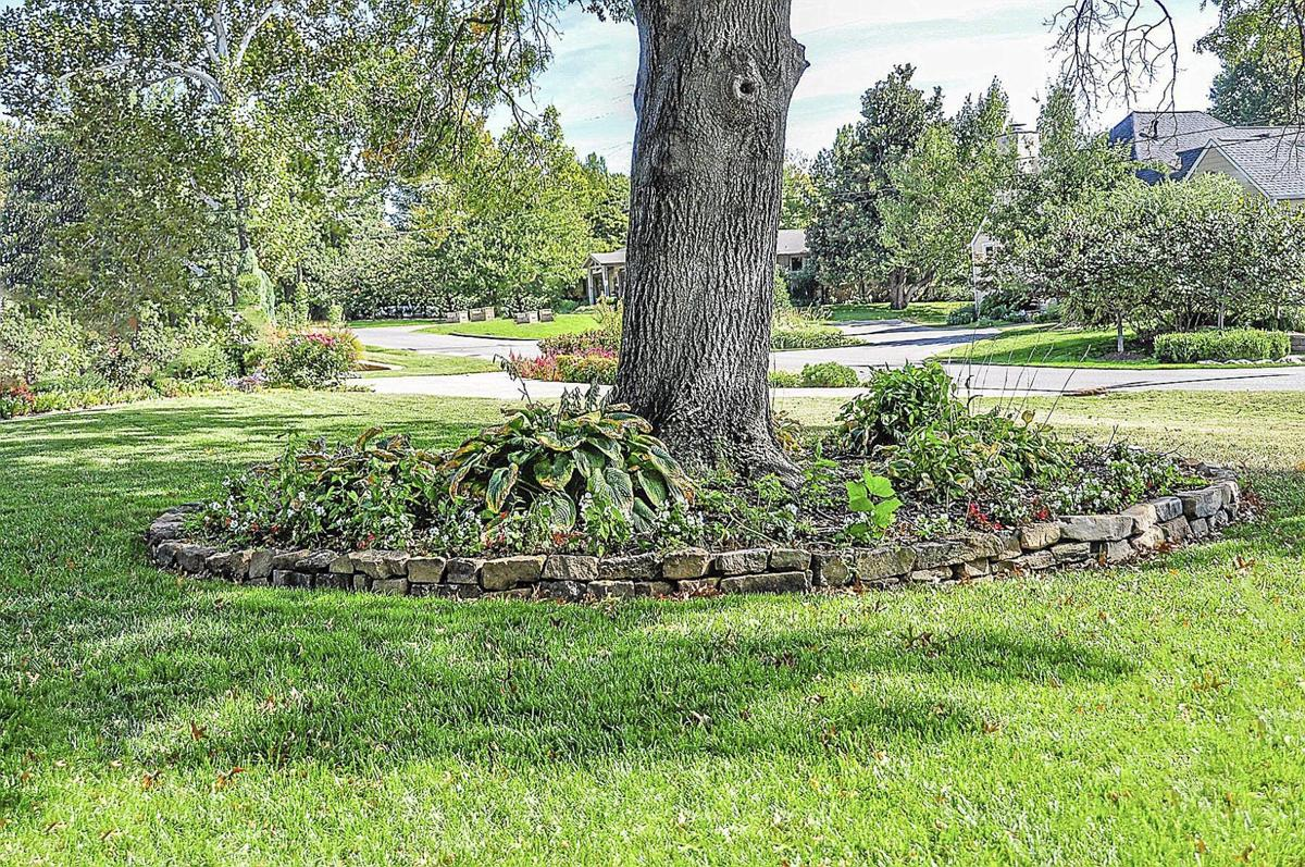 Flower beds around trees - Placing A Garden Bed Under A Tree Can Have Serious Consequences Courtesy