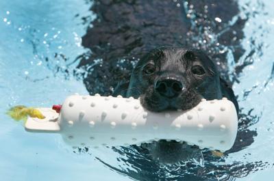 DoggieSwimmers